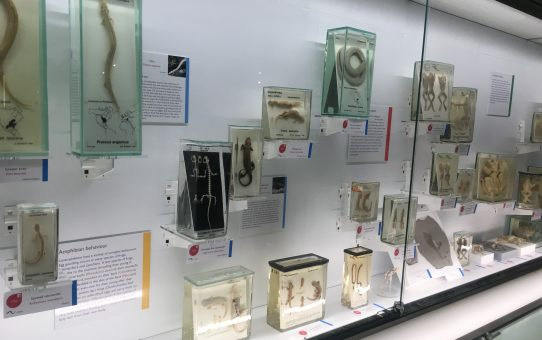 Visiting the refurbished Cambridge Zoology Museum