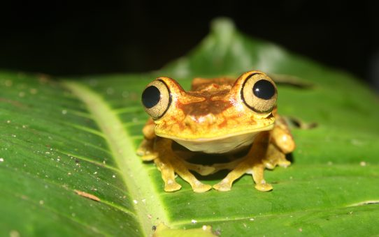 #FeatureFriday: Herping in the Chocó